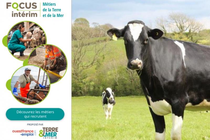 Dossier emploi Ouest France et Terre & Mer Intérim : Témoignage d'un exploitant agricole vacher