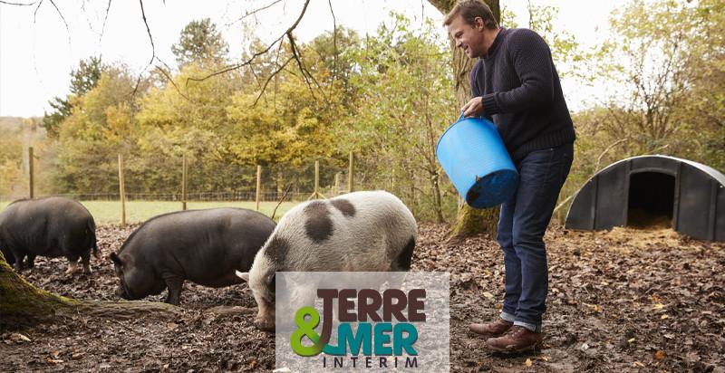 Porcher, agent d'élevage porcin