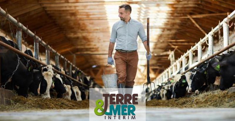 Vacher.ère, agent d'élevage laitier